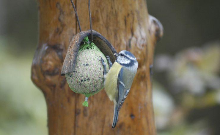 Tenk litt på alle småfuglene
